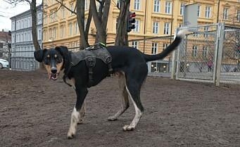 Slipp hundene fri — det er vår i Oslo! Se hvor hunden din lovlig kan gå løs under båndtvang