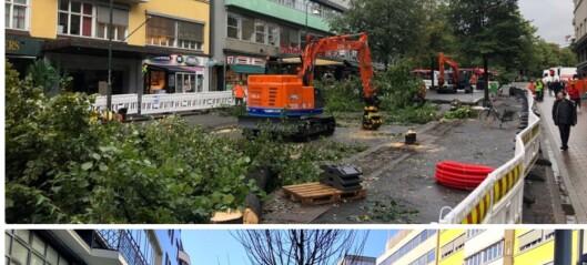 De gamle trærne i Olav Vs gate ble felt og erstattet. Prisen for 12 nye trær havner på over 3,8 millioner