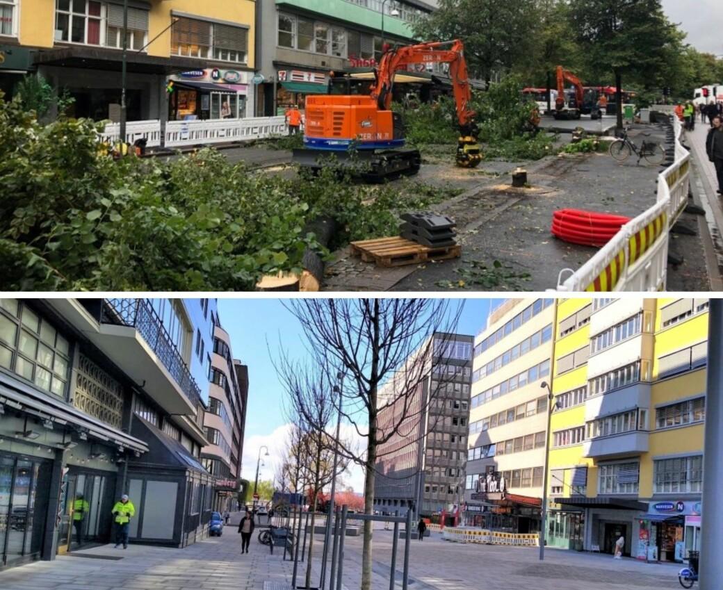 Øverst ser du trærne Oslo kommune felte etter at byrådet satte i gang oppgradering av Olav Vs gate til over 104 millioner kroner. Nederste bilde viser nyplantede trær til over 3,8 millioner kroner.