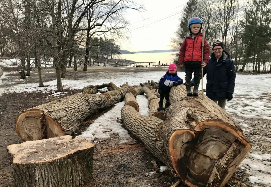 Magnus (3) (f.v) og broren hans, Johan (5), har funnet en ny lekeplass, etter at folk fra bymiljøetaten har felt ett av de mange store trærne i alleen langs turveien ut mot Hukodden. Her er småguttene på søndagstur med pappa Aslak Widerøe Kristoffersen.
