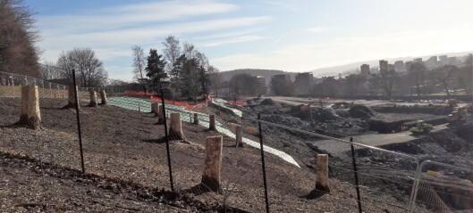 Hugger ned 63 trær i Tøyenparken: - Bevaring vil påvirke kostnad og fremdrift ved nytt bad