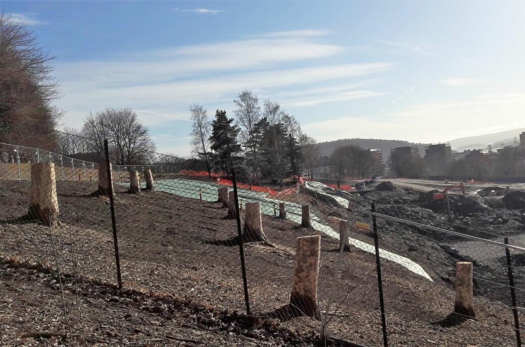 Slik ser Tøyenparken ut akkurat nå. Blant de 50 trærne som allerede er felt i parken var det også tre almetrær, som er rødlistet og utryddet i store deler av Europa.