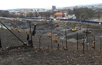 133 friske trær hugget ned av kommunen i vår: - Har ingen oversikt over trær som er planlagt felt, sier miljøbyråden