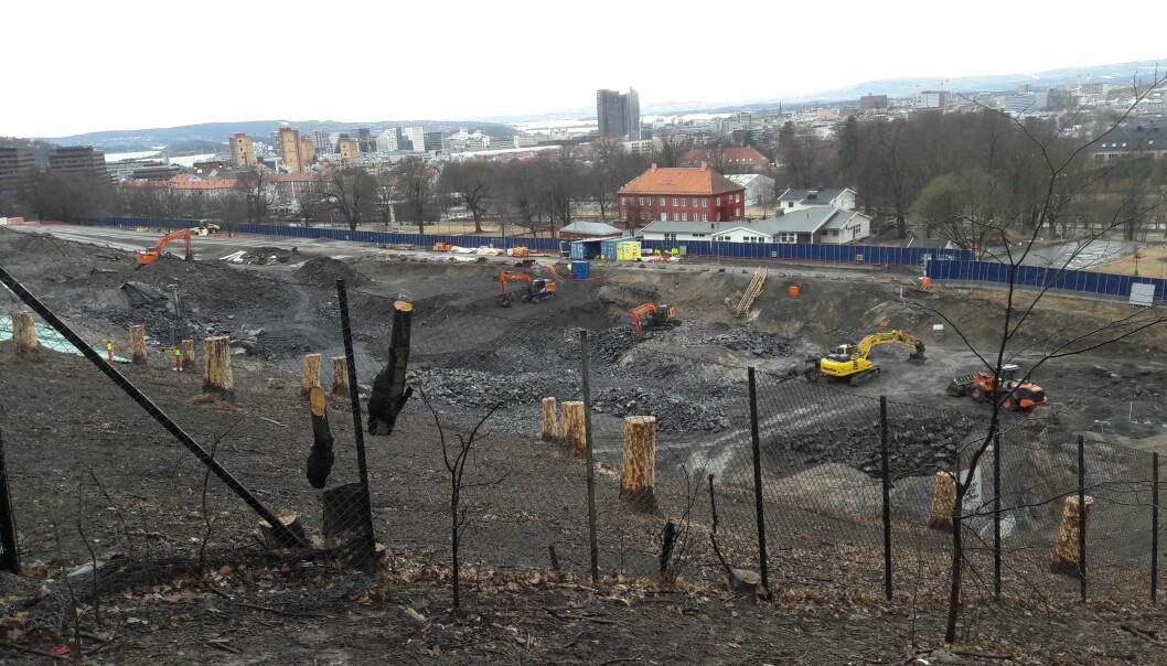 Fra nordsiden av byggegropa for Tøyenbadet ser det slik ut nå. Til sammen 63 trær hugges ned, tre av dem er utrydningstruede almetrær.