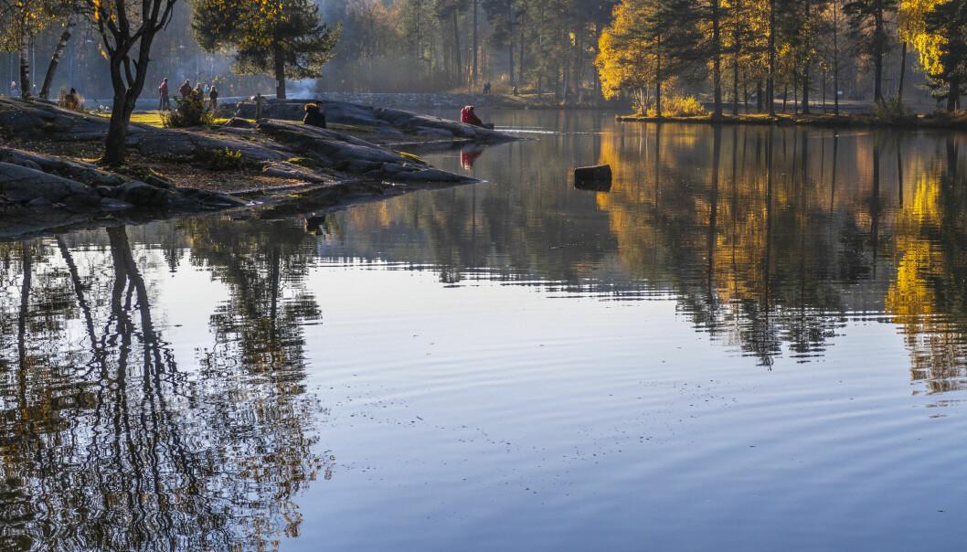 Sognsvann i Nordmarka i Oslo er et populært utfartssted det meste av døgnets timer.
