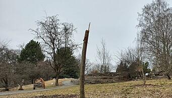 Botanisk hage brukte ni år på å dyrke det sjeldne treet. Nå dør det etter å ha blitt utsatt for hærverk