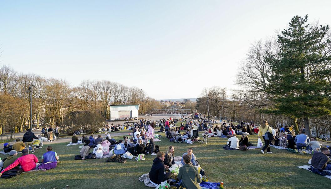 Folk samlet seg i små grupper i parken på St. Hanshaugen lørdag kveld.