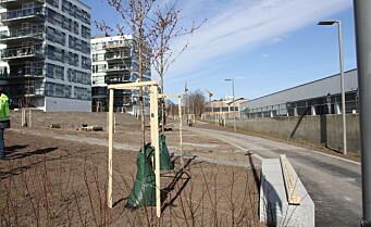 Planter 145 trær og fyller på 2500 kvadratmeter jord på Ensjø