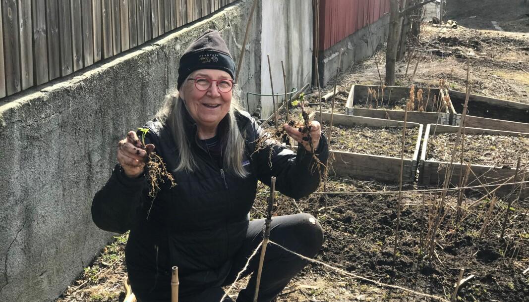 Marcia Kyle (72), opprinnelig fra Texas, viser fram noe av det som har begynt å spire tidlig i april. Gartnerkollektivet Parkens grøde ligger noen hundre spadetak fra sterkt trafikkerte Ring 2 og Griffenfeldts gate.