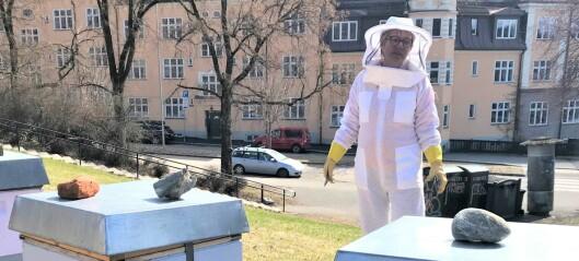 Etter bie-tyveriet: Det summer av liv rundt bikubene i Torshovparken. —Biene betyr mye for oss, sier Randi