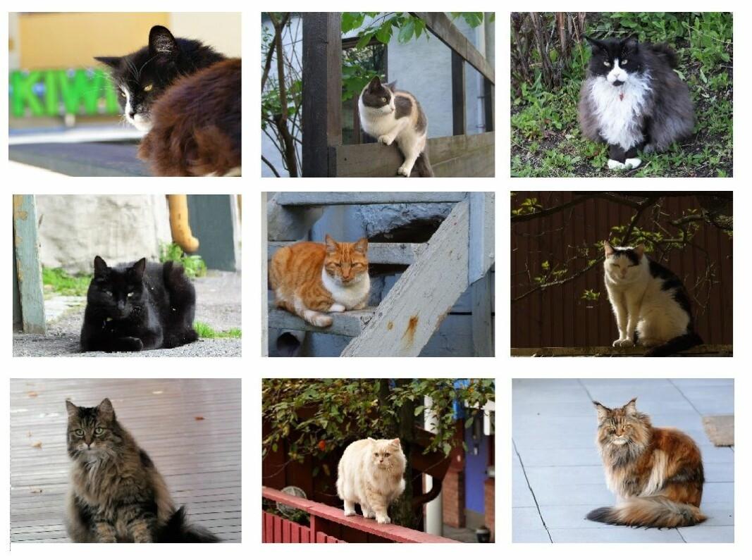 Et galleri av noen av Kampens mange katter. Du kjenner kanskje noen av disse?