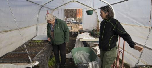 På Geitmyra finner kvinner sammen i et fellesskap for å dyrke jorda. Menn vil de helst ikke ha med