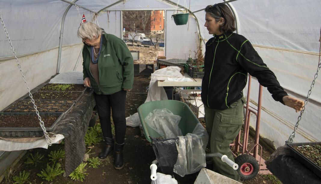 Leder Frøydis Helene Hauge (bak) og deltager Susana Pereira, opprinnelig fra Portugal, i regionavdelingen til Det norske hageselskap, driver urbant landbruk på jord de disponerer i Geitmyra skolehage. .