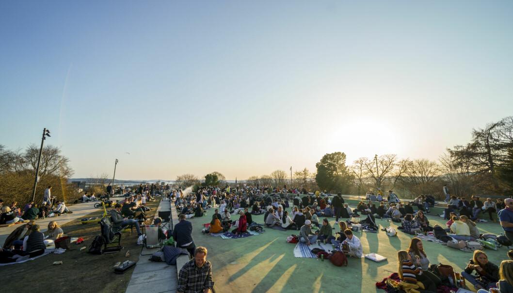 Folk har samlet seg i parkene i godvær i helgene. Natt til søndag var intet unntak. Her er folk samlet tidlig på kvelden på toppen av parken på St. Hanshaugen i april. Foto: Torstein Bøe / NTB
