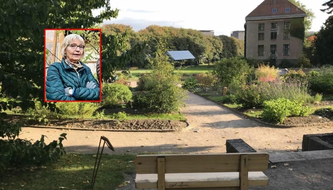 Andrea, fra Botanisk Hages Venner krever svar på hva som skjer med Linné-benken.