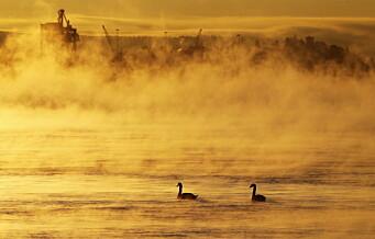 Oslofjorden gror igjen – urovekkende utvikling