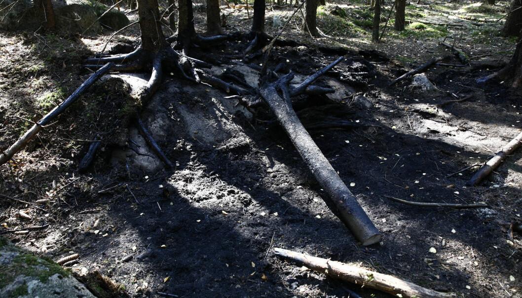 18. juli 2018 ble et funnet et delvis oppbrent lik i Maridalen i Oslo.