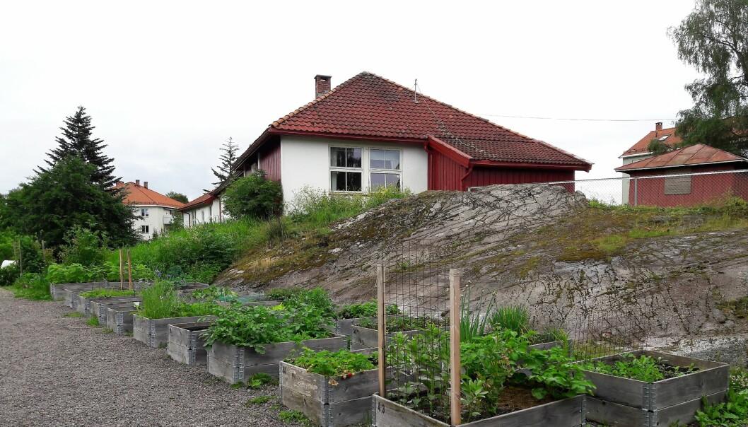 Noen hoggorm er ikke funnet på området i og rundt Keyserløkka barnehage