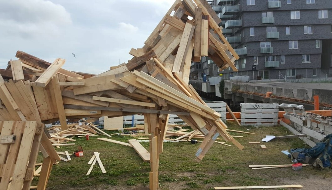 Årets sankthanshest er høydepunktet på sankthansfesten. Her er den under bygging med Sørenga-bebyggelsen i bakgrunnen.