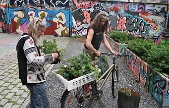 Hausmania og Vega scene samarbeidet om plantefest i Haus-skråninga