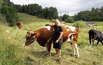 Også bykua Frøya trenger ferie. Nå nyter hun og de andre kyrene fra Lindeberg gård sommeren i Østmarka
