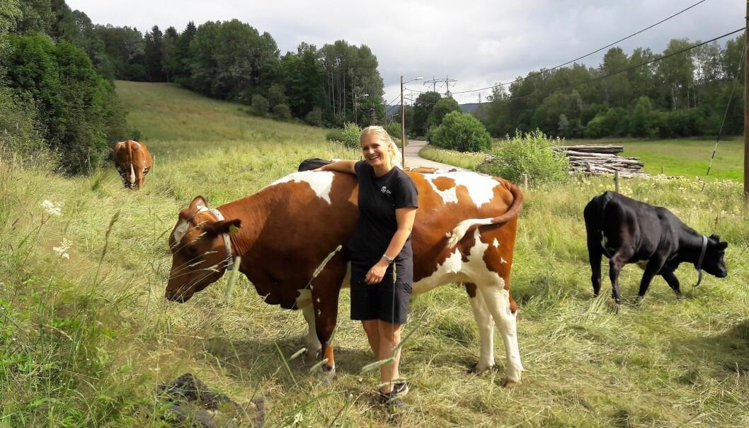 I Østmarka, mellom Ellingsrud og Mariholtet er bymiljøetatens egne kuer på sommerferie. Driftsleder på Nordre Lindeberg gård, Henriette Sæbø ser til dem hver dag, og er raus med kos og klapp. Her med Frøya som skal bli mor for første gang i høst.