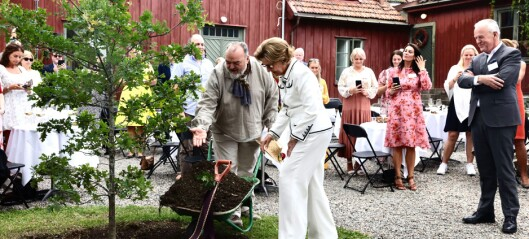 Sonja plantet Dronningeika på Vestre Aker prestegård. Snart blir det nabolagshus med kafé her