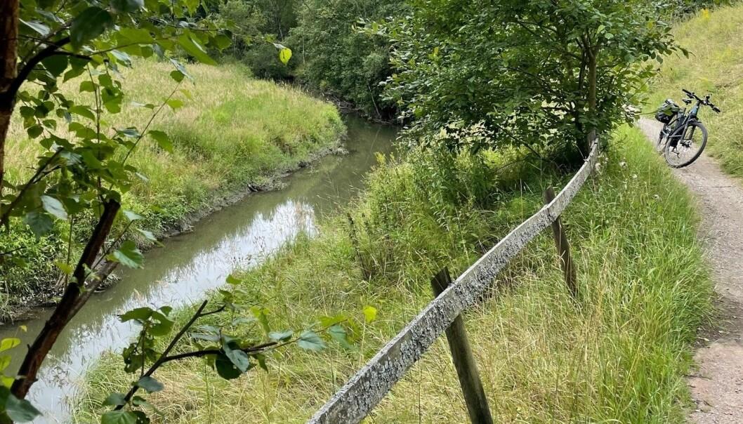 Grønt og frodig og tett på naturen langs Alnaelva.