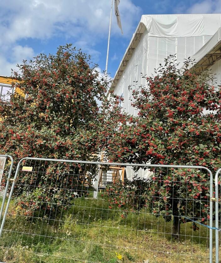 Twin Trees foran Briskeby brannstasjon.