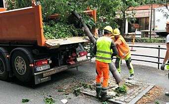 Har ventet ukevis på svar fra miljøbyråd Sirin Hellvin Stav (MDG): Hvorfor ble 50 år gamle trær felt i Løkkeveien?