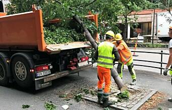 Miljøbyråd Sirin Hellvin Stav (MDG) om trærne som ble hogget i Løkkeveien: - Trær må skiftes ut jevnlig