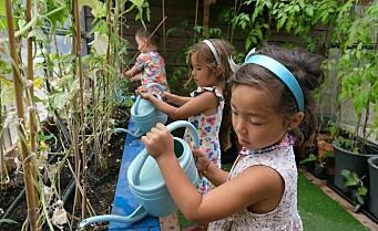 Populær satsing i Gamle Oslo. – Det er magisk for barna å kunne plukke i hagen