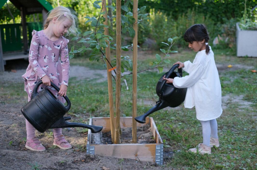 Vanning av nye trær og planter i Sørenga barnehage.