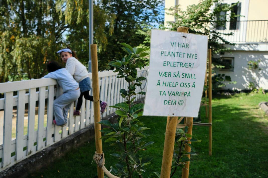 Åkeberg barnehage har fått nye epletrær som må tas vare på.