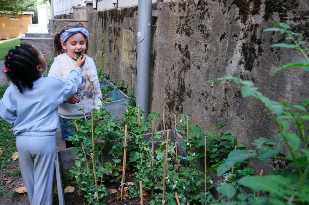 Barna i Åkeberg barnehage synes det er gøy å smake på ulike urter