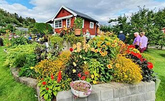 Solvang kolonihage på Sogn vant Hageprisen. Har blomstring for insekter på ulike tider i sesongen
