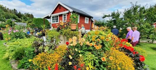 Hage i Solvang kolonihager på Sogn vant Hageprisen. Har blomstring for insekter på ulike tider i sesongen